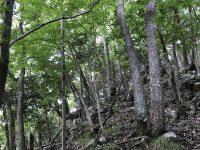 夏は雑木探検